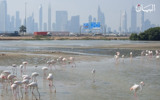 الصورة: الإمارات موطن الطيور المهاجرة