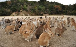 الصورة: الصورة: جزيرة الأرانب