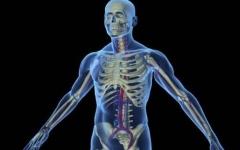 الصورة: الصورة: علماء ألمان يبتكرون تقنية تجعل أعضاء الجسم شفافة