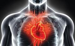 الصورة: الصورة: علاج جيني لقصور القلب