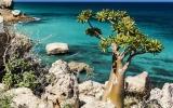 الصورة: الصورة: جزيرة سقطرى.. موطن اللبان والجنطيانا وشجرة دم العنقاء