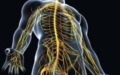 الصورة: الصورة: البرفيرية «اضطرابات تراكم الكيماويات الطبيعية».. تأثيرات مباشرة على الجهاز العصبي