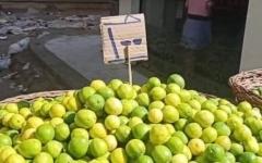 الصورة: الصورة: ارتفاع جنوني لأسعار  الليمون في مصر