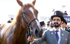 الصورة: الصورة: مارك جونستون: محمد بن راشد الشخصية الأكثر تأثيراً في سباقات الخيول عالمياً