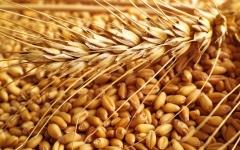 الصورة: الصورة: الإمارات والسعودية تدعمان شعب السودان بتوريد 540 ألف طن من القمح