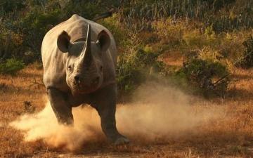 الصورة: الصورة: بالفيديو.. مطاردة مرعبة بين وحيد قرن وسياح
