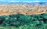 الصورة: الصورة: ئاقسو.. الصحراء التي تحولت الى واحة خضراء