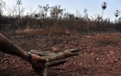 الصورة: الصورة: بالصور .. مجزرة الأفاعي في الأمازون