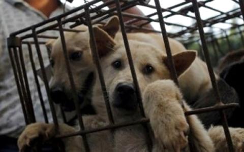 الصورة: الصورة: اعتقال 16 لصّ كلاب في فيتنام