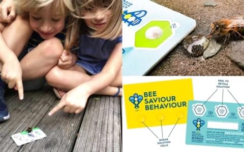 الصورة: الصورة: بطاقات ائتمانية بـ«السكر» تردع انقراض النحل