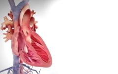 الصورة: الصورة: تطوير أداة لإصلاح صمامات القلب التالفة