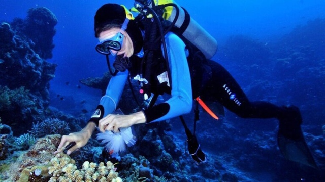 علاج مرض السل في قاع البحر - البيان
