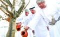 الصورة: الصورة: شجرة اللبان تستقبل زوار جناح عمان في إكسبو