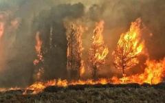 الصورة: الصورة: بالفيديو.. حرائق هائلة في لبنان تهدد البيوت والمدارس