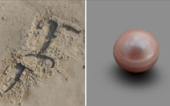 """الصورة: الصورة: اكتشاف أقدم لؤلؤة طبيعية في العالم في جزيرة """"مروّح"""" بأبوظبي"""