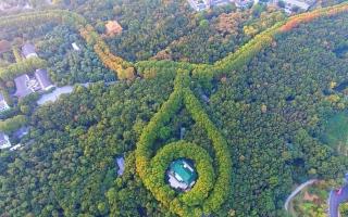 الصورة: الصورة: قلادة من الأشجار تطوّق قصراً!
