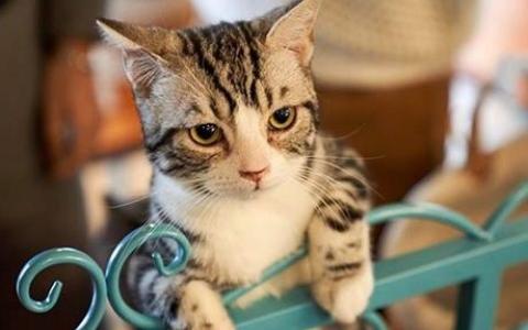 الصورة: الصورة: تحذير للحوامل من تربية الحيوانات الأليفة