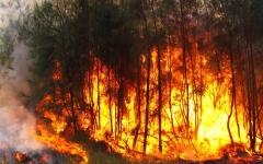الصورة: الصورة: بالفيديو.. أستراليا تحاول احتواء حرائق الغابات وتستعد للأسوأ بعد مقتل ثلاثة
