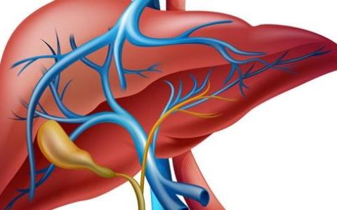 الصورة: الصورة: أطعمة تضر بصحة الكبد.. تجنبها فوراً