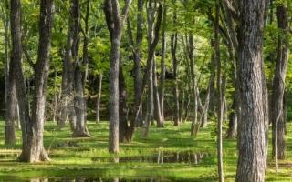 الصورة: الصورة: حديقة إيشغامي المائية تحصد أولى جوائز أوبل للعمارة