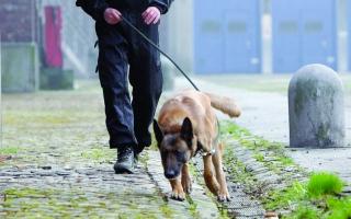 الصورة: الصورة: تخصصا في سرقة «الكلاب والقطط» بالاحتيال