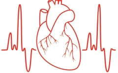 الصورة: الصورة: متلازمة بروجادا..  اضطراب في ضربات القلب يهدد الحياة