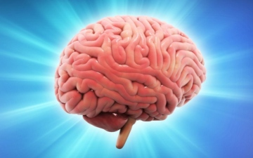 الصورة: الصورة: اكتشاف مذهل.. هذا ما يحدث بعد إزالة نصف الدماغ