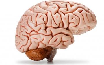 الصورة: الصورة: باحثون: استئصال أحد شقي المخ لدى مصابي الصرع يعوَض من الشق الآخر