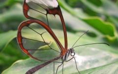 الصورة: الصورة: زجاج الفراشات..  بمنتهى الشفافية