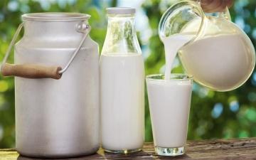 الصورة: الصورة: دراسة تكشف اعتقاداً خاطئاً عن شرب الحليب