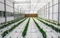 الصورة: الصورة: الإمارات تعزز الأمن الغذائي بالأبحاث والتقنيات الزراعية
