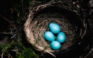 الصورة: الصورة: أجمل بيض في العالم