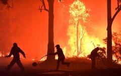 الصورة: الصورة: نفوق أكثر من مليار حيوان في حرائق غابات استراليا