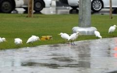 """الصورة: الصورة: """"الأرصاد"""": استمرار هطول الأمطار في الإمارات غدا"""