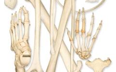 الصورة: الصورة: تصنيع أنسجة ذكية تُحاكي غلاف عظام الإنسان