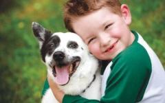 الصورة: الصورة: امتلاك كلب أليف في الطفولة قد يقلل من الإصابة بالفصام