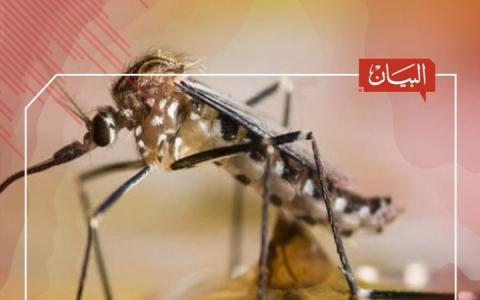 الصورة: الصورة: دبي تكافح البعوض بإجراءات صارمة