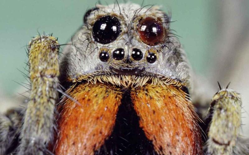 الصورة: الصورة: (فيديو) بعد الحرائق والفيضانات.. أخطر العناكب بالعالم تنتشر في أستراليا