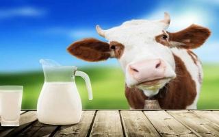 الصورة: الصورة: ما علاقة حليب البقر بالشيخوخة؟