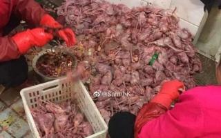 الصورة: الصورة: بعد انتشار كورونا.. دعوات لحظر استهلاك الثعابين والخفافيش في الصين