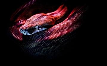 الصورة: الصورة: هولندا .. إنتاج سُم الثعابين لأول مرة في المختبر