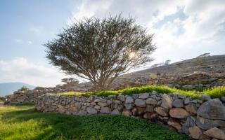 الصورة: الصورة: شاهدوا جمال الطبيعة وكيف تحولت رأس الخيمة إلى لوحة خضراء خلابة