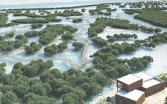 """الصورة: الصورة: افتتاح مشروع """"ممشى القرم"""" في جزيرة الجبيل بأبوظبي أمام الجمهور اليوم"""