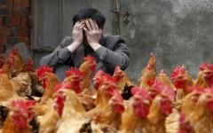 الصورة: الصورة: بعد كورونا.. فيروس إنفلونزا الطيور يتفشى في الصين