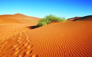الصورة: الصورة: الرحّالة الإسباني أدولفو ريفادينيرا في بلاد العرب