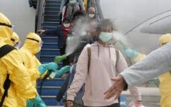 الصورة: الصورة: آكل النمل متهم جديد وراء انتشار فيروس كورونا
