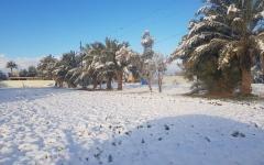 الصورة: الصورة: الثلوج تغطي بغداد للمرة الأولى منذ 12 عاما