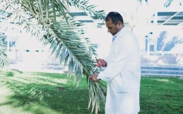 الصورة: الصورة: باحث من جامعة الإمارات ينتج أصباغا غذائية ومحسن للتربة من سعف النخيل