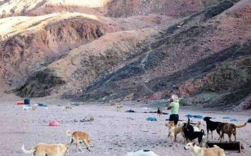 الصورة: الصورة: تفاصيل مروعة حول التهام كلاب لسيدة في مصر