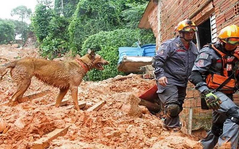 الصورة: الصورة: وفاة 13 شخصاً وفقدان 45 جراء هطول غزير للأمطار في البرازيل